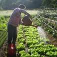 Fonte: Confederação Nacional dos Municípios A Confederação Nacional de Municípios (CNM) chama a atenção dos gestores municipais para a prestação de contas do Programa Nacional de Alimentação Escolar (Pnae) e […]
