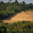 Fonte: POR ESTADÃO CONTEÚDO Sociedade Rural Brasileira (SRB) e a Bolsa de Valores Ambientais (BVRio) lançam na próxima semana serviço para disciplinar registro ambiental A Sociedade Rural Brasileira (SRB) e […]