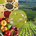 Editadas novas regras para adesão ao Sistema Unificado de Atenção a Sanidade Agropecuária