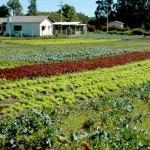 Municípios conveniados a RFB devem informar o Valor da Terra Nua por hectare